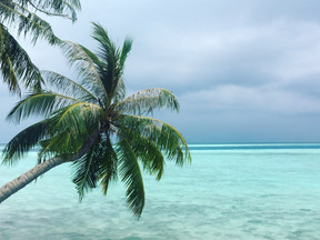 Beyond the Shallow Reefs (Depth in Maldives)