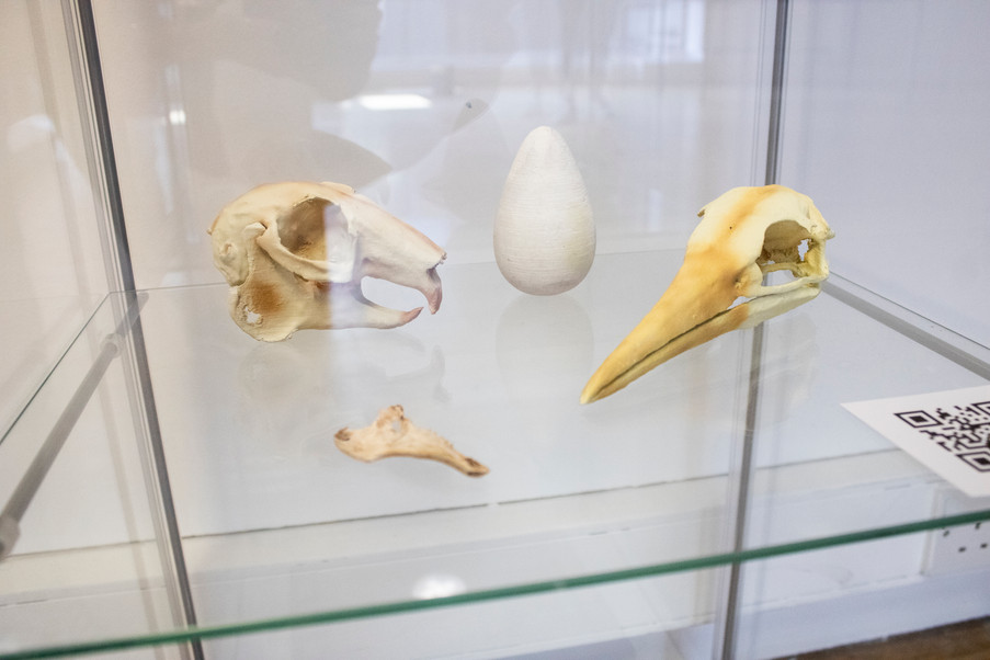 .Hare and Gannet skull by ChapelPrintsCo