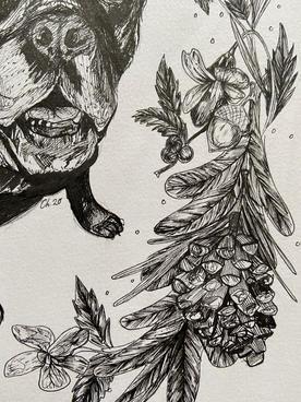 Ollie, pine detail
