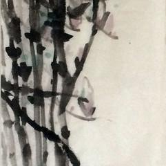magnolia in springtime