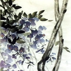 wisteria with inscription spring wind
