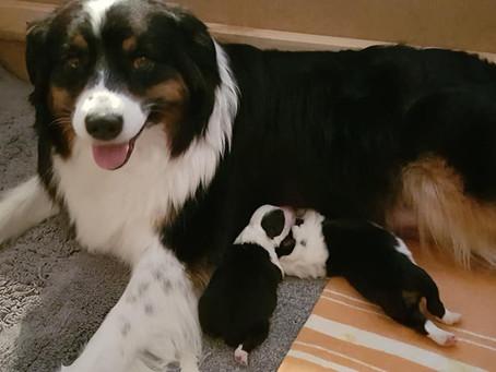 Kilja and Bruno had puppies!
