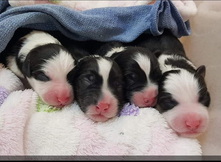 We have puppies!!