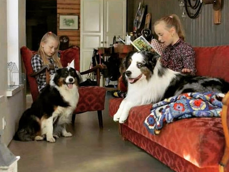 The dogs and the kids were on TV!
