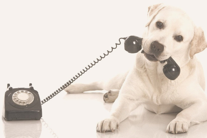 db5xc-chien-telephone_edited_edited_edited.jpg