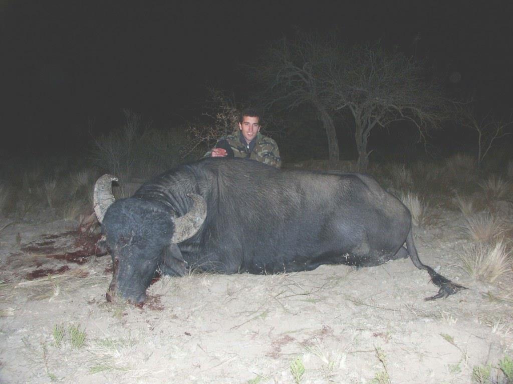 Buffalo Tyncho.jpg