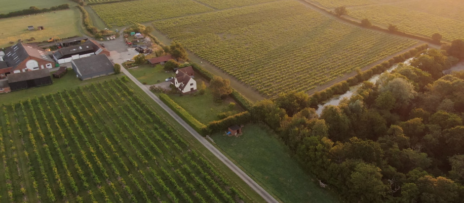 A bird's eye view of the vineyard...