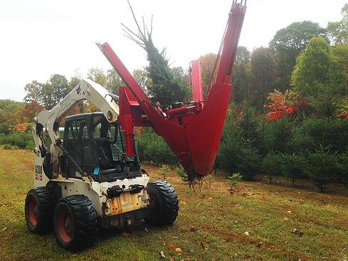 CSM Services Landscape Tree Planting