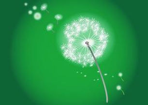 blowing-dandelion-34680.jpg
