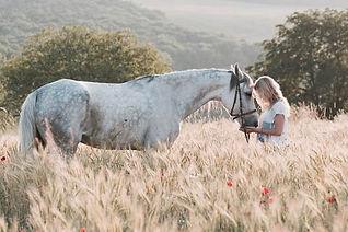 reiki-horse-bb-1.jpg
