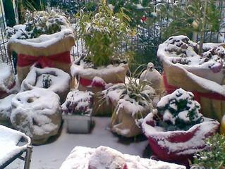 Winterruhe im Garten