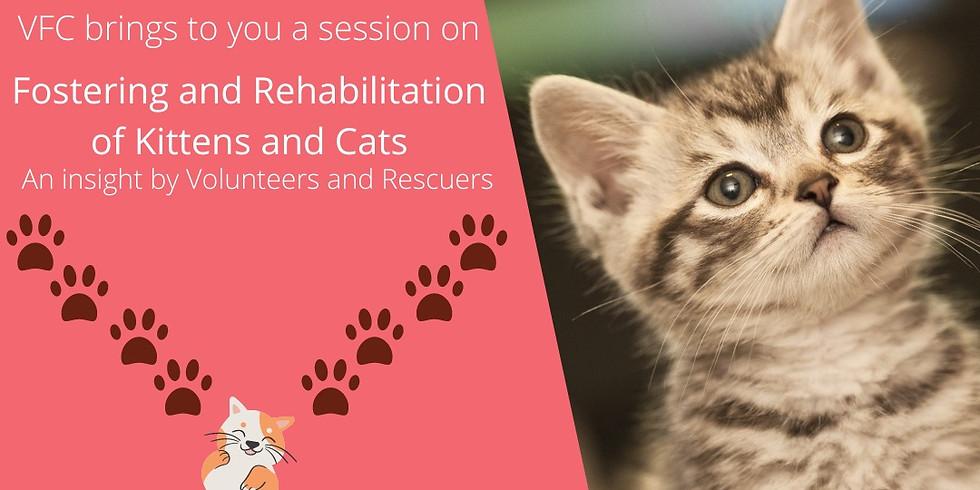 Kitten/Cat fostering awareness