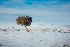 Sort Snow Landscapes