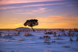 Juniper Sunset Snow