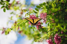 Utah Butterfly