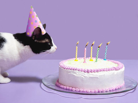cat-wearing-birthday-hat-blowing-out-candles-on-birthday-cake-steven-puetzer.jpg