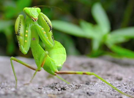 Praying the pests away
