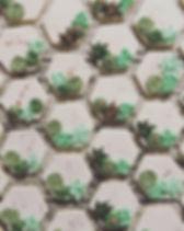 #succulent #decoratedcookies part 2  #ca