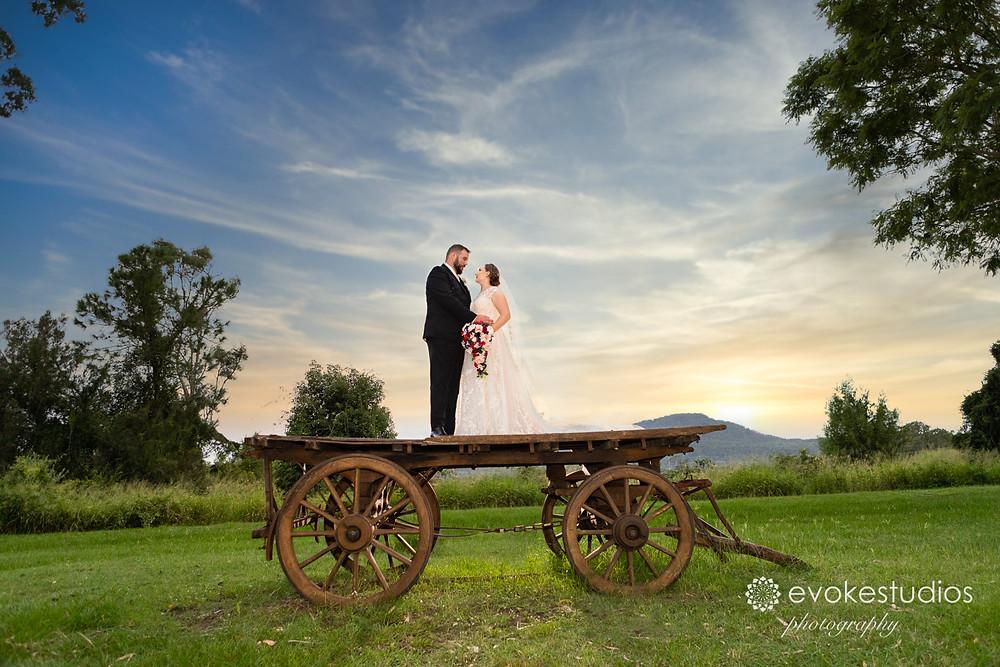 Bearded dragon wedding photographer