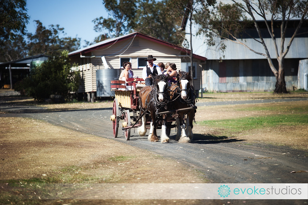 Horse drawn wedding transport