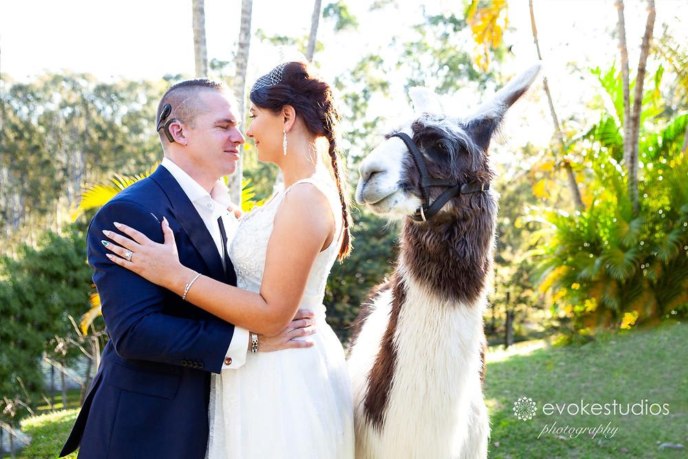 cheeky wedding lamas