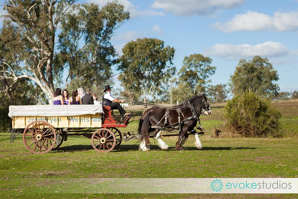 Horse & cart wedding transport