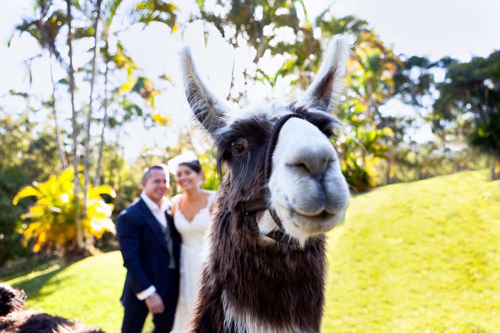 Lama Wedding photo