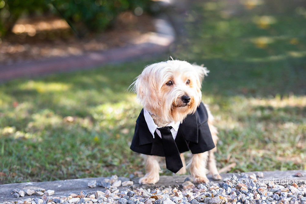 Pet at your wedding