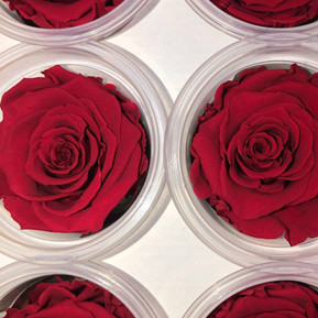 Classic Red Eternal Roses