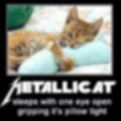 metalicat.jpg