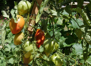 Les légumes bio de la Bastide de Lussan