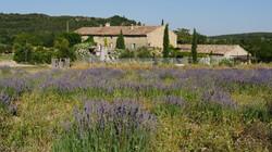Le champs de lavande de la Bastide