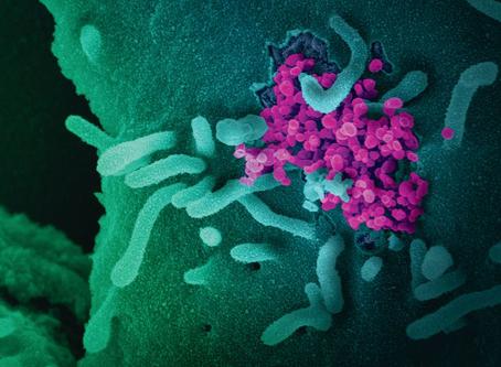 Therapie im Zeitalter von SARS-CoV-2