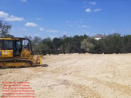 Useful Information About Waxachie, TX Mesquite Removal Services