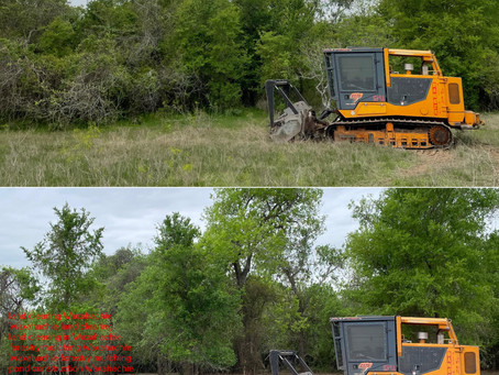Waxahachie, TX Mesquite Removal Process, and Techniques