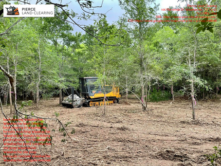 Waxahachie, TX Mesquite Removal Services: Everything You Need to Know