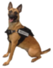 Dog Training Vancouver, Guardian K9 Services, protection, nosework, Obedience, Puppy Classes, Detection