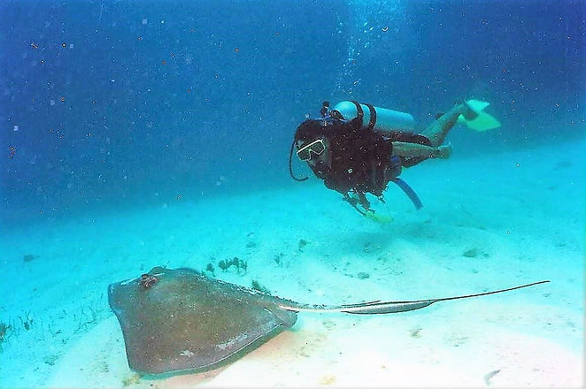 Nikko Norte Scubadiving Duiken Mexico
