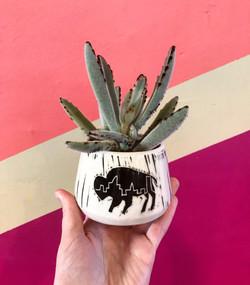 buffalo planter