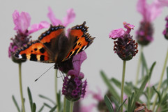 'To Flourish and To Flutter' by Nuala Ei