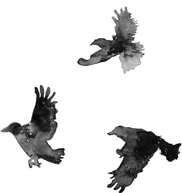 Crows_descending.jpg