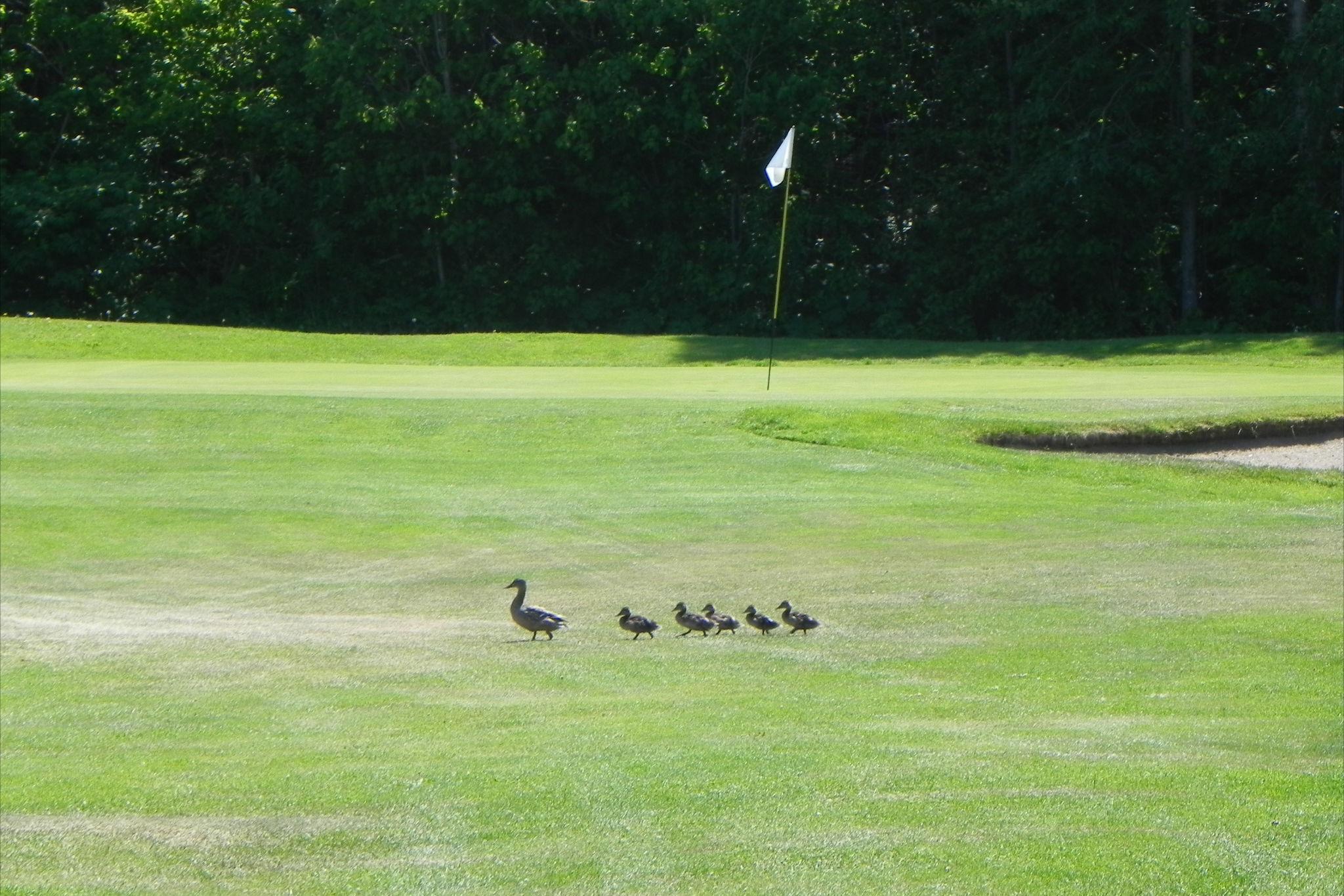 Club_de_Golf_Le_Gaspésien,_Ste-Anne-des-Monts_020.JPG