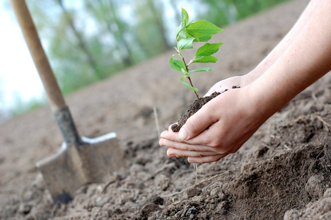 """project """"Plant a Tree"""""""