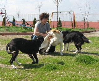 Sarah TS Hunde.jpg