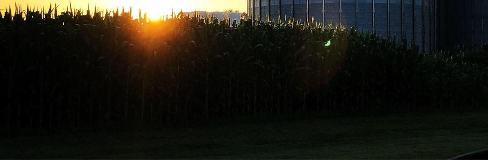 farm1_edited.jpg