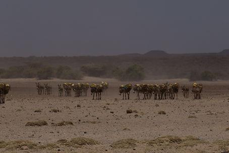 Desert landscape in northern Kenya