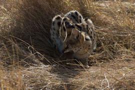 Safari (6 of 13).jpg