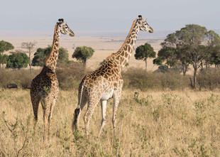 Safari (4 of 13).jpg