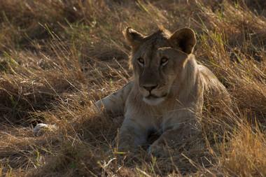 Safari (2 of 13).jpg
