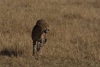 Safari (7 of 13).jpg